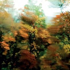 ALIEN MUSTANGS - The World...